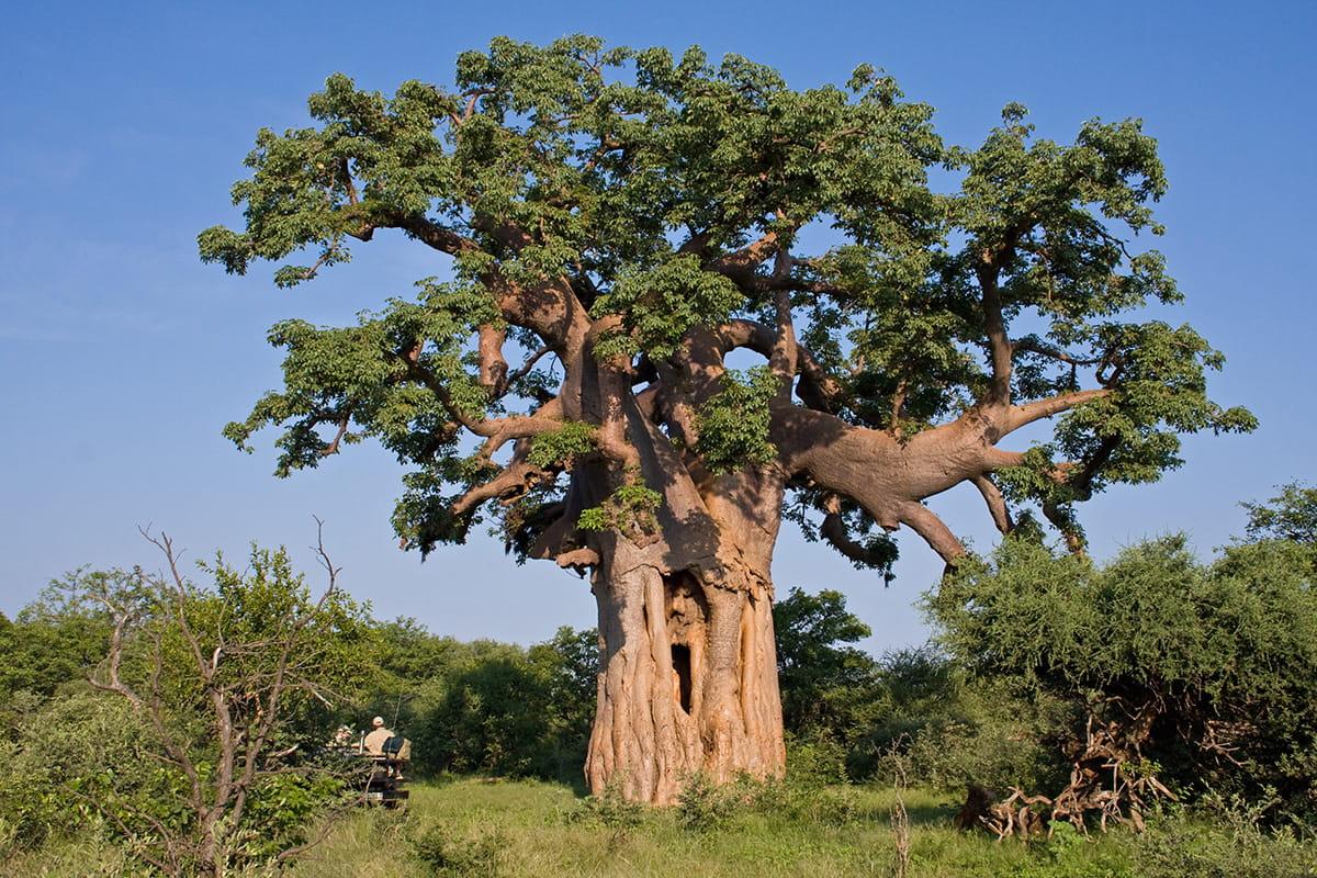 Explore Limpopo-Lipadi - Private Game and Wilderness Reserve